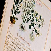 Herbolaria en Códices Antiguos